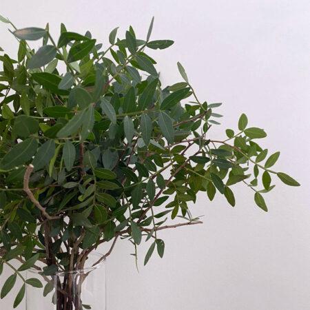 Bosje pistache - vers groen - glorious home venlo